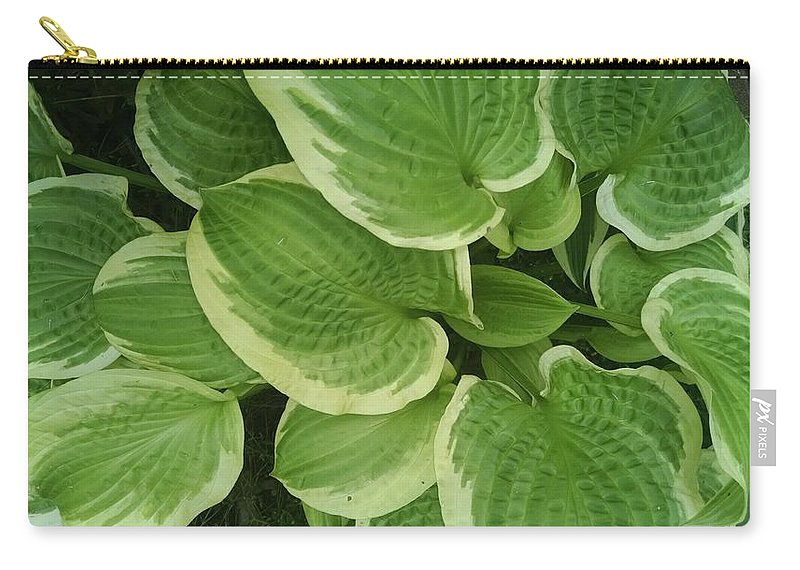 Hostas Galore Carry-all Pouch featuring the photograph Hostas Galore by Connie Young