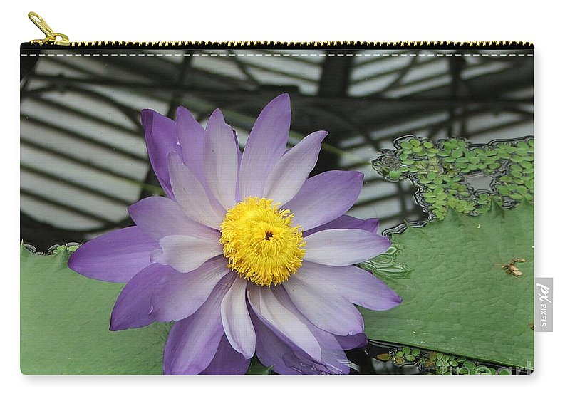 Purple Carry-all Pouch featuring the photograph Hothouse Waterlily by Heather Lennox