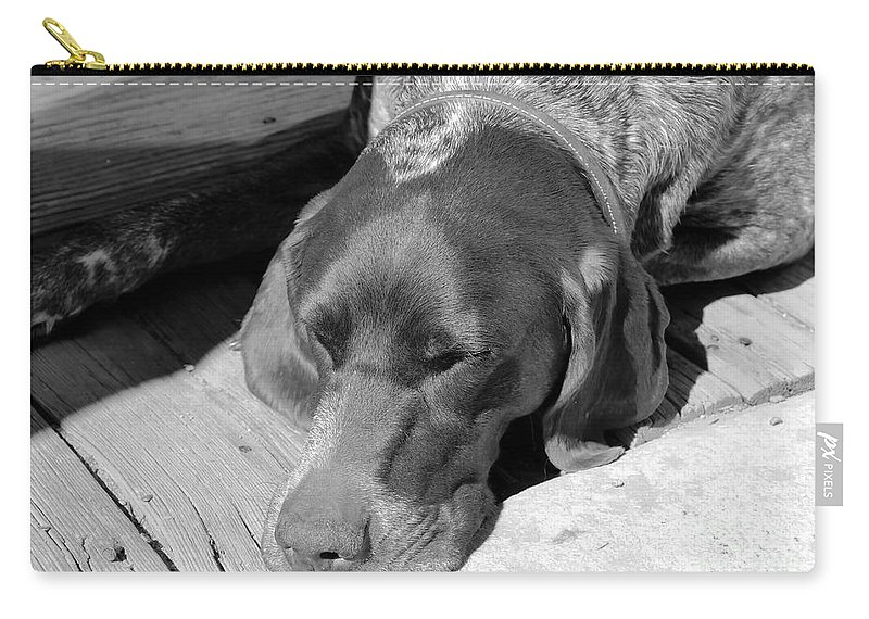 Dog Carry-all Pouch featuring the photograph Hound Dog by David Lee Thompson