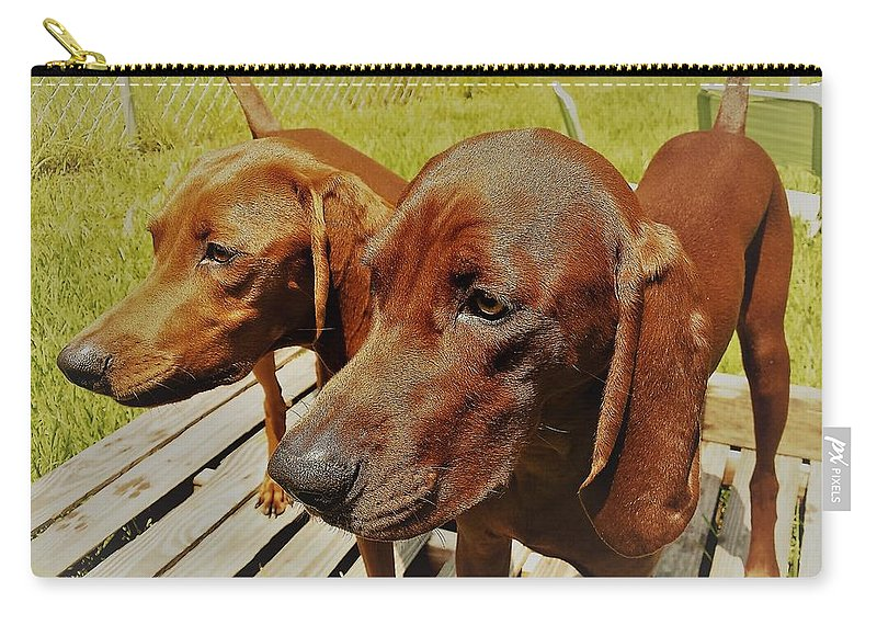 Hounds Redbone Dogs Hunting Animals Cute Carry-all Pouch featuring the photograph Hounds by Lee Barrett