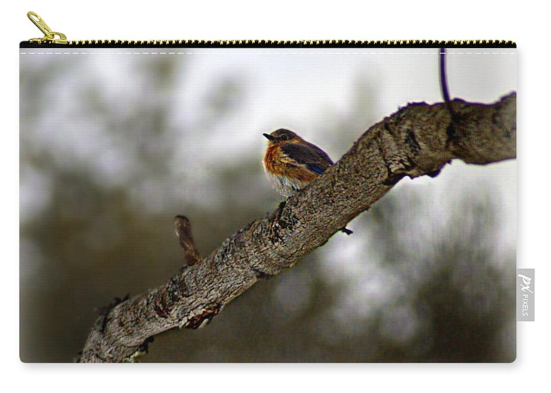 Cold Carry-all Pouch featuring the photograph Huddled Bluebird by Catherine Melvin