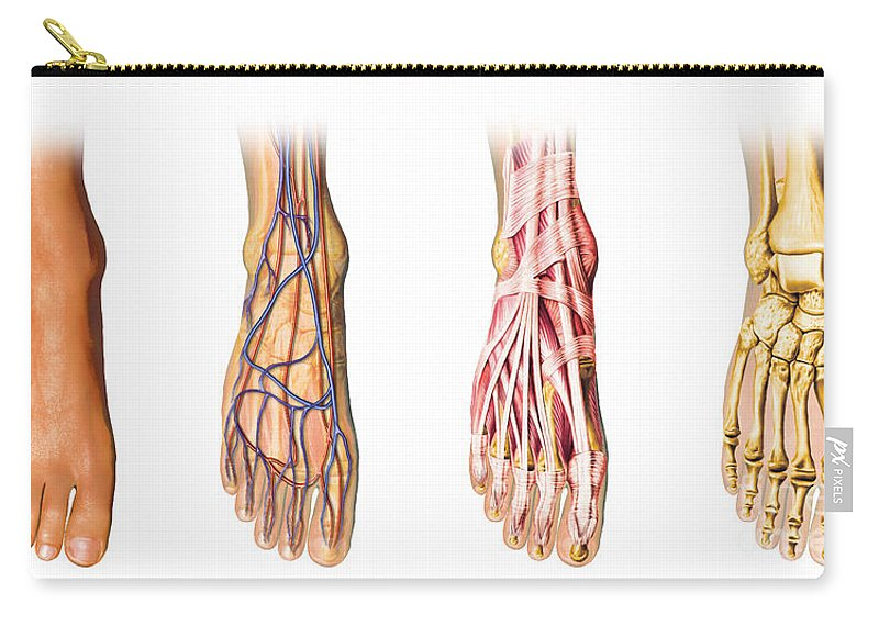 Anatomy Carry-all Pouch featuring the digital art Human Foot Anatomy Showing Skin, Veins by Leonello Calvetti