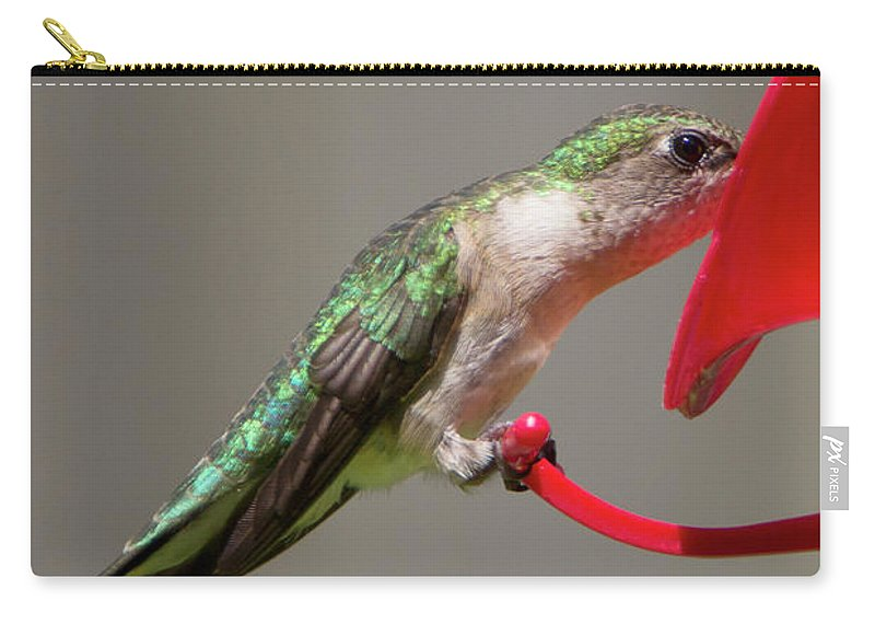 Bird Carry-all Pouch featuring the photograph Humming Bird 10 by David Stasiak