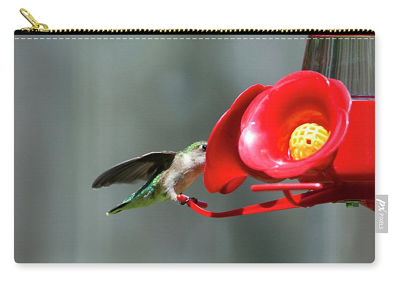 Bird Carry-all Pouch featuring the photograph Humming Bird 6 by David Stasiak