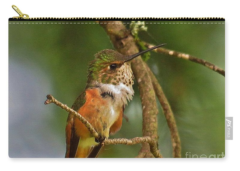 Hummingbird Carry-all Pouch featuring the photograph Hummingbird With An Itch by Mel Manning