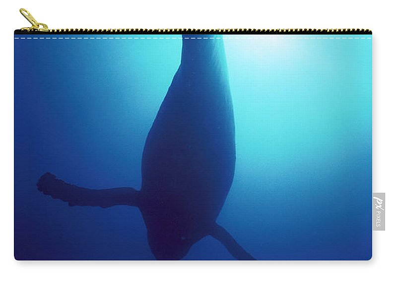 Mp Carry-all Pouch featuring the photograph Humpback Whale Megaptera Novaeangliae by Flip Nicklin