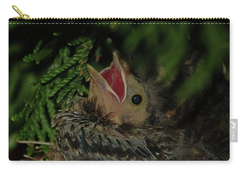 Bird Carry-all Pouch featuring the photograph Hungry Bird by Gaby Swanson