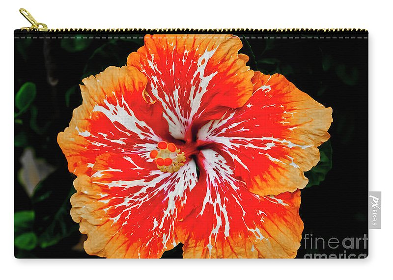 Flower Carry-all Pouch featuring the photograph Hybrid Hibiscus II Maui Hawaii by Jim Cazel