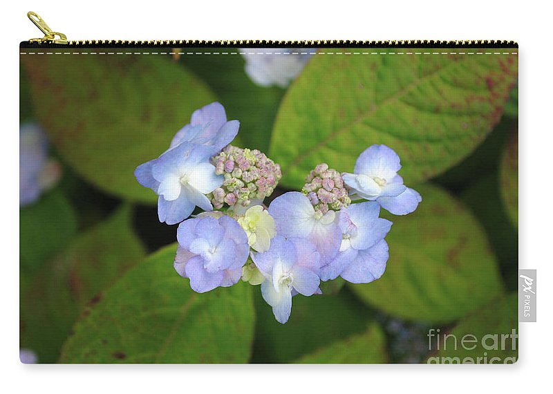 Hydrangea Carry-all Pouch featuring the photograph Hydrangea by Alicia Espinosa