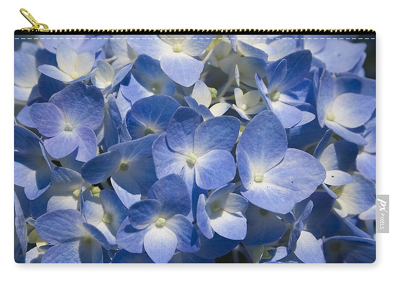 Flower Bloom Blue White Close Nature Sunny Summer Hydrangea Carry-all Pouch featuring the photograph Hydrangea by Andrei Shliakhau