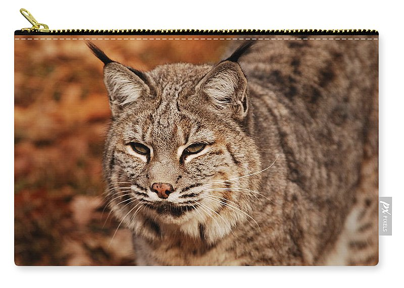 Bobcat Carry-all Pouch featuring the photograph I Am One Good Looking Bobcat by Lori Tambakis