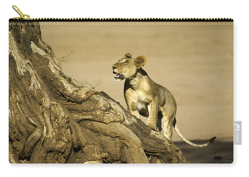 Africa Carry-all Pouch featuring the photograph I Can Do This by Michele Burgess