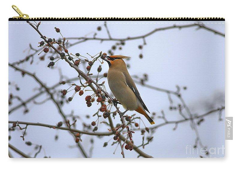 Bird Carry-all Pouch featuring the photograph I Got It by Deborah Benoit
