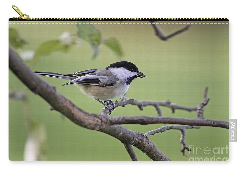 Chickadee Carry-all Pouch featuring the photograph I Have The Prize by Deborah Benoit