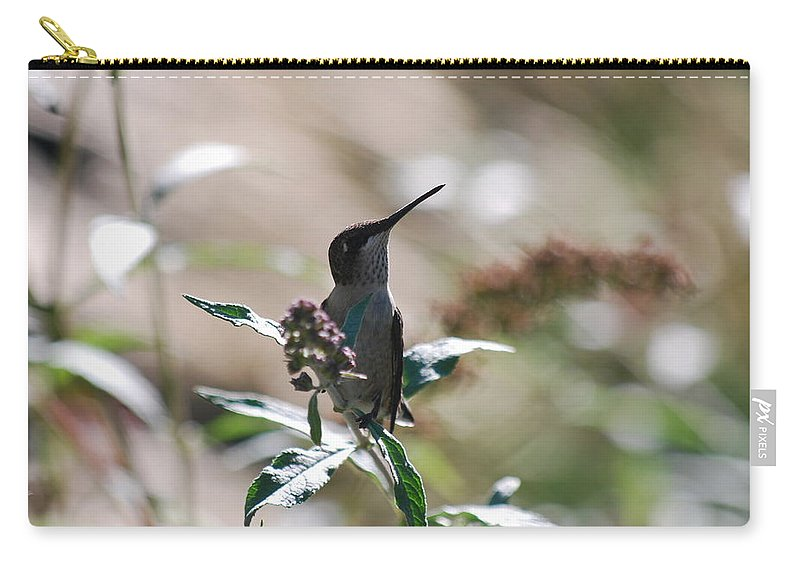 Hummingbird Carry-all Pouch featuring the photograph I Love My Profile by Lori Tambakis