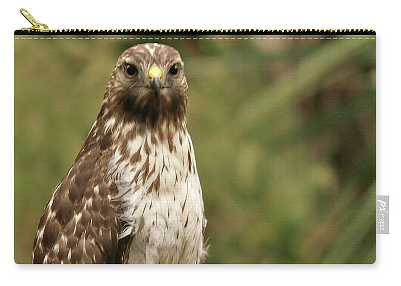 Bird Carry-all Pouch featuring the photograph I See You by Phill Doherty
