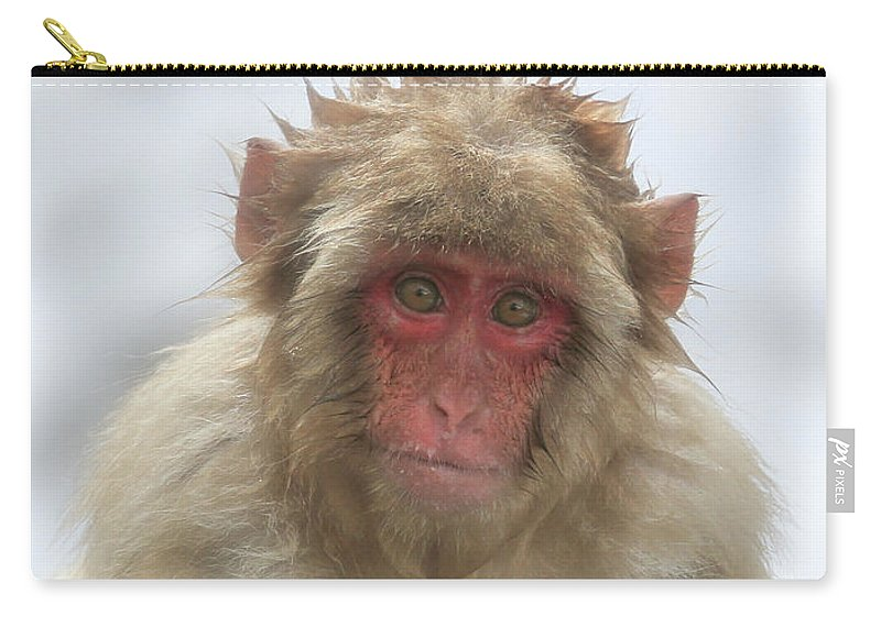 Snow Monkeys Carry-all Pouch featuring the photograph I Think I Should Have Stayed In The Water by Leigh Lofgren