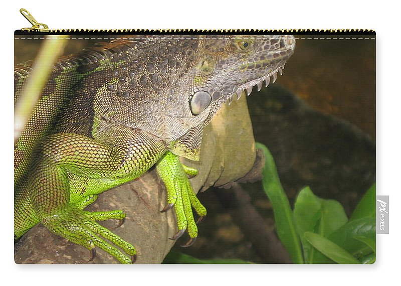 Iguana Carry-all Pouch featuring the photograph Iguana - A Special Garden Guest by Christiane Schulze Art And Photography