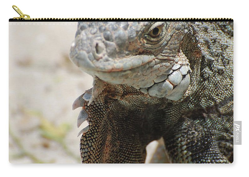 Iguana Carry-all Pouch featuring the photograph Iguana On A White Sand Beach Up Close by DejaVu Designs