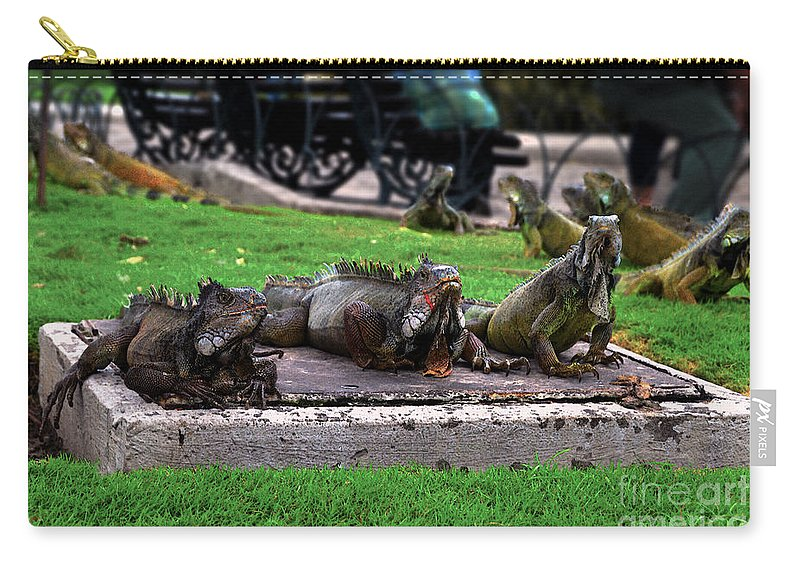 Iguana Carry-all Pouch featuring the photograph Iguana Trio by Catherine Sherman