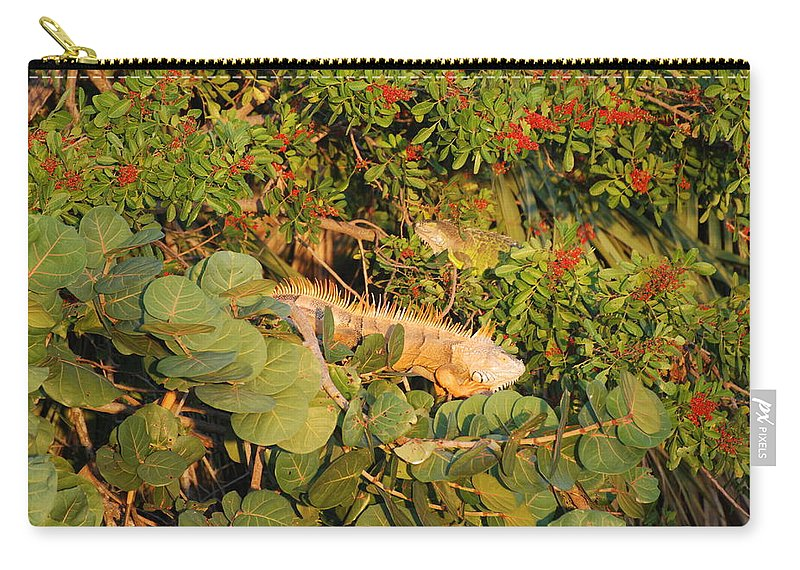 Sunset Carry-all Pouch featuring the photograph Iguanas by Rob Hans