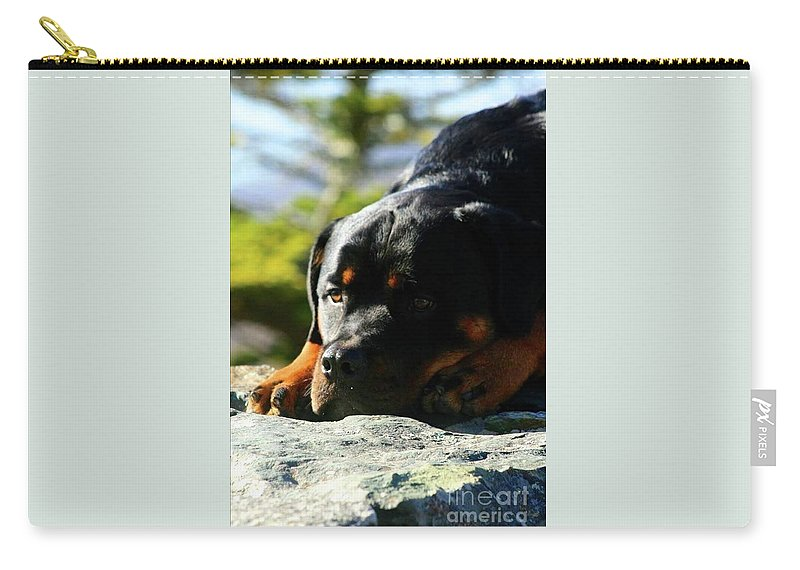 Rottweiler Carry-all Pouch featuring the photograph I'm Bored Rottie by Gregory E Dean