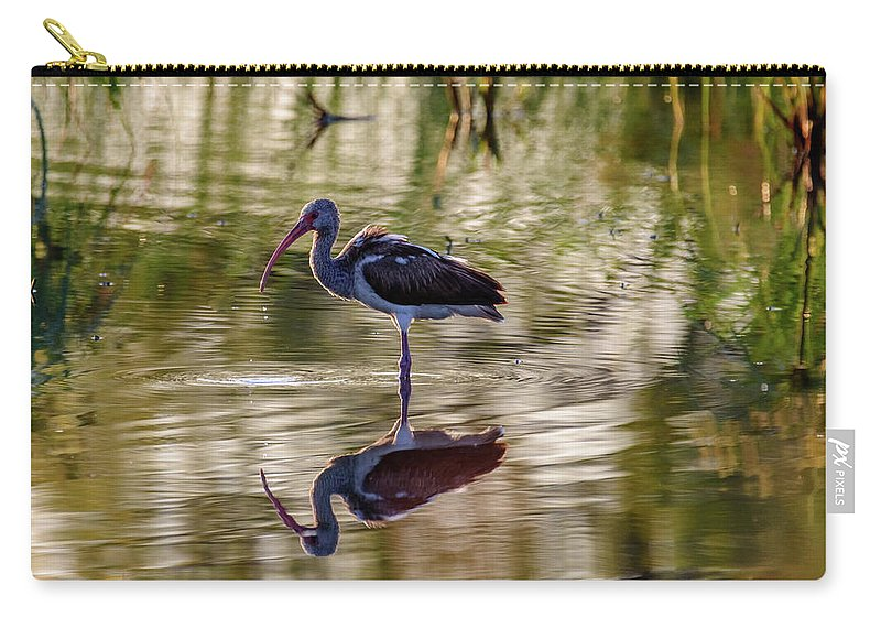 Birds Of South Texas Carry-all Pouch featuring the photograph Immature White Ibis At Sunrise by Debra Martz