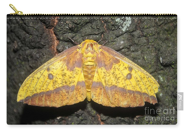 Imperial Moth Carry-all Pouch featuring the photograph Imperial Moth by David Lee Thompson