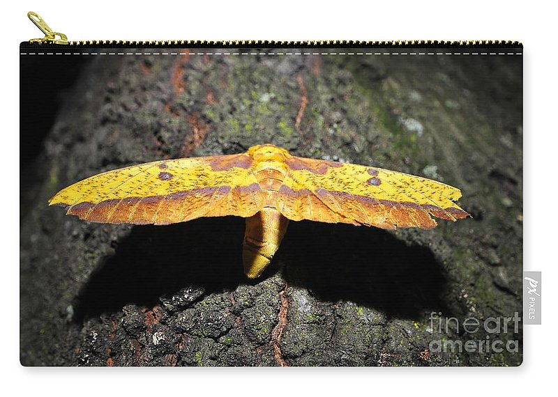 Imperial Moth Carry-all Pouch featuring the photograph Imperial Night by David Lee Thompson