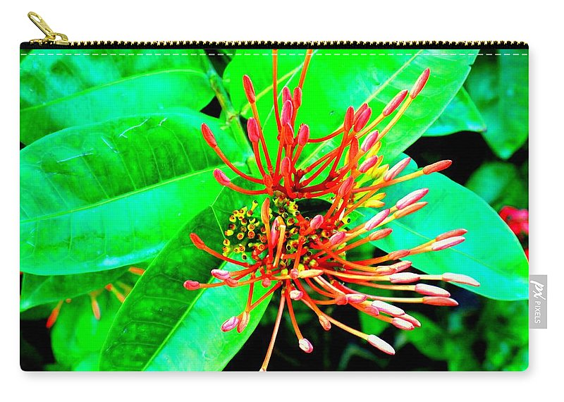 Flower Carry-all Pouch featuring the photograph In My Garden by Ian MacDonald