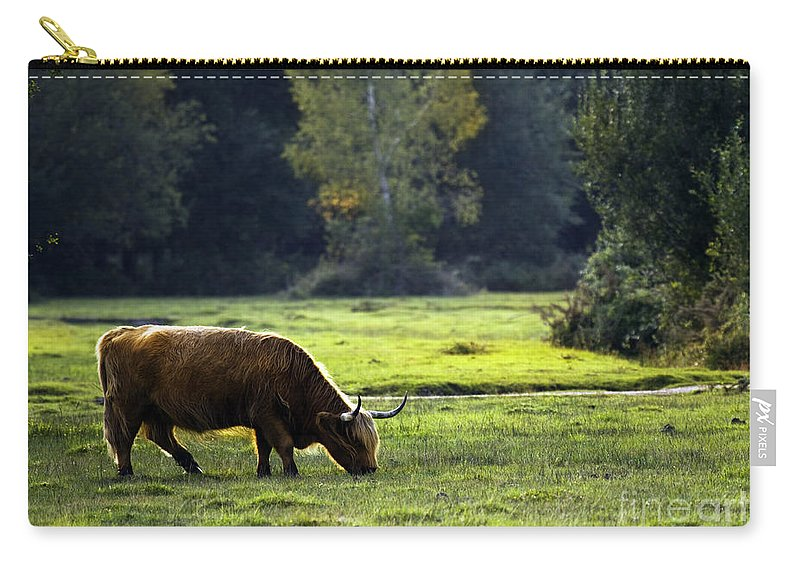 Heilan Coo Carry-all Pouch featuring the photograph in New Forest by Angel Tarantella