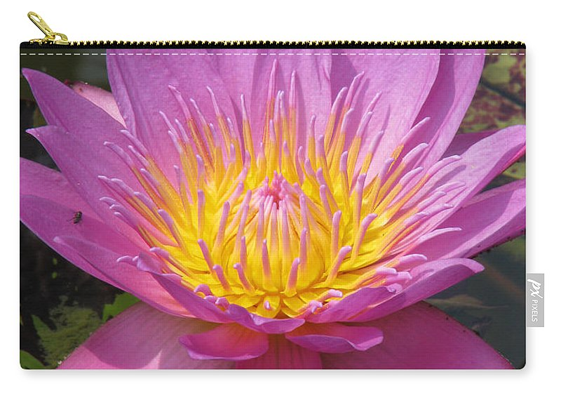 Lotus Carry-all Pouch featuring the photograph In Position by Amanda Barcon