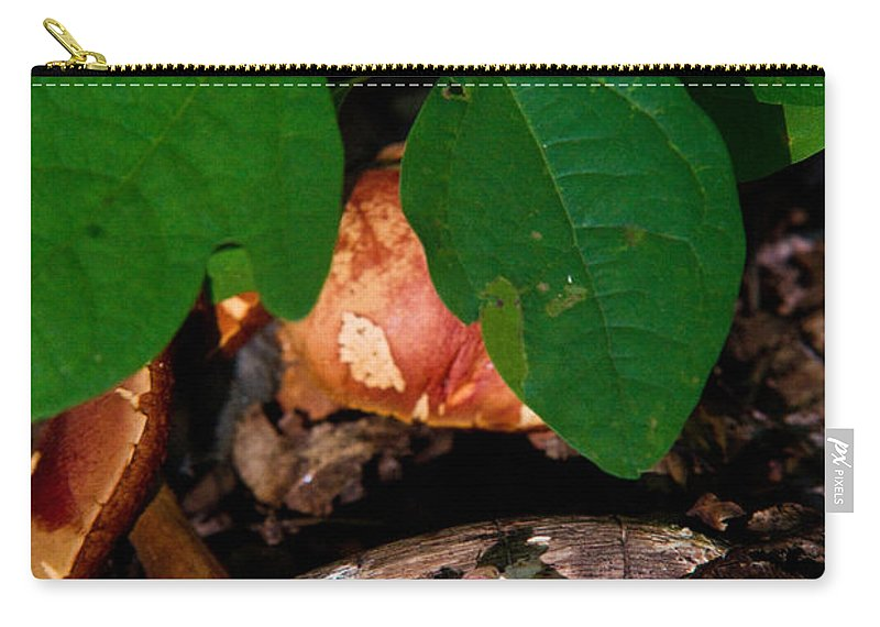 Cove Carry-all Pouch featuring the photograph Indian Pipe 7 by Douglas Barnett