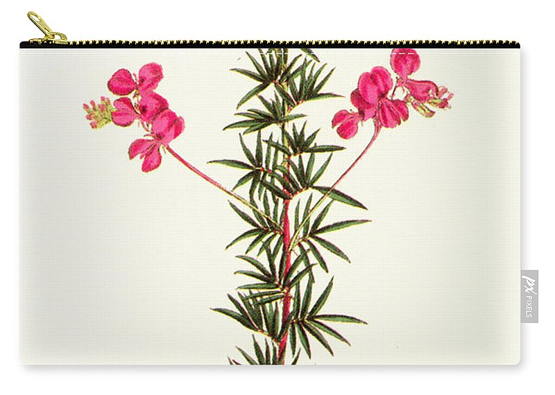 1799 Carry-all Pouch featuring the photograph Indigo Plant by Granger
