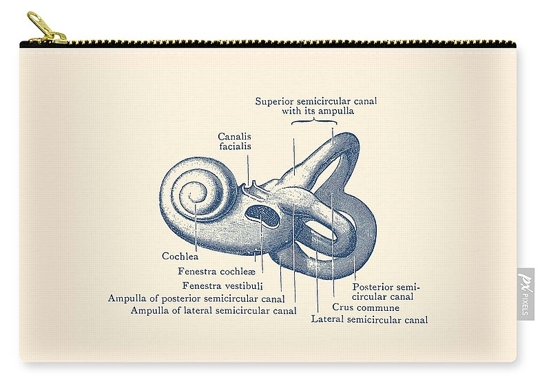 Inner Ear Anatomy Diagram Vintage Poster Carry All Pouch For Sale