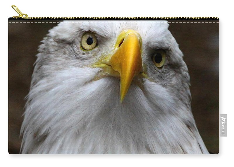 American Bald Eagle Carry-all Pouch featuring the photograph Inquisitive Eagle by Barbara Bowen