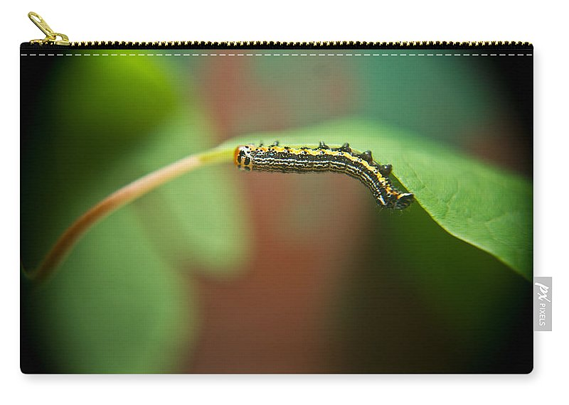 Cove Carry-all Pouch featuring the photograph Insect Larva 4 by Douglas Barnett