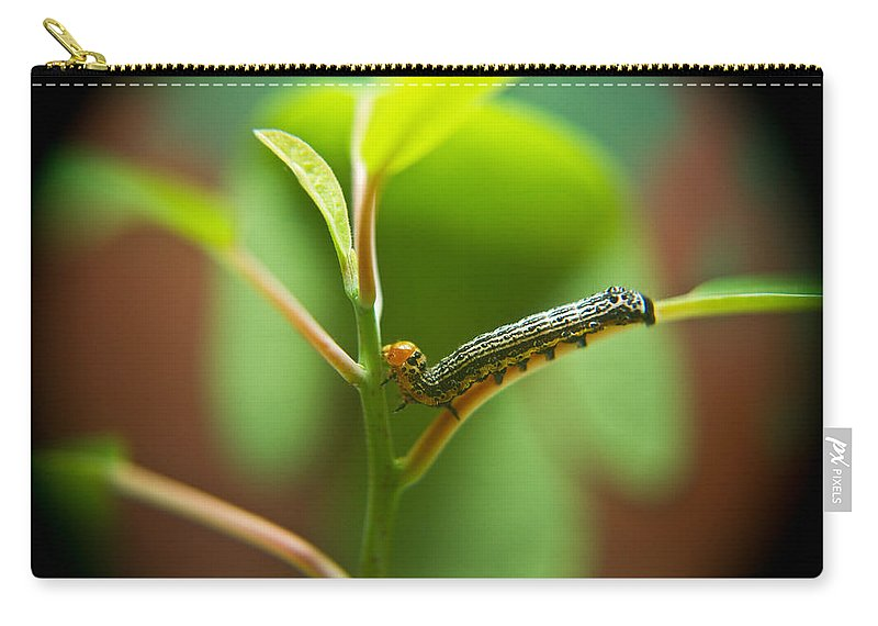Cove Carry-all Pouch featuring the photograph Insect Larva 5 by Douglas Barnett