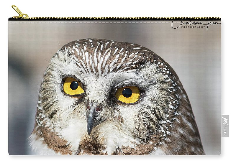 Owl Carry-all Pouch featuring the photograph Intense Look by Charlaine Jean