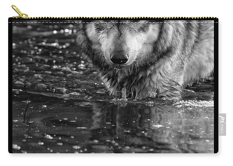 Wolf Wolves Lupine Canis Lupus Wildlife Animal Photography Photograph Carry-all Pouch featuring the photograph Intense Reflection by Shari Jardina