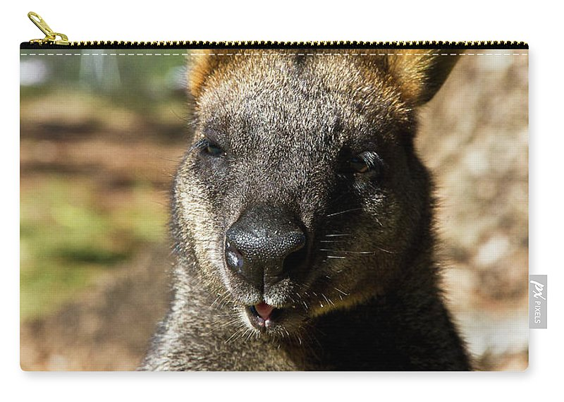 Swamp. Wallaby. Close Up Carry-all Pouch featuring the photograph Interview With A Swamp Wallaby by Miroslava Jurcik
