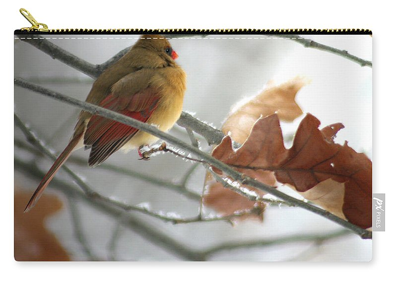 Jenny Gandert Carry-all Pouch featuring the photograph Into The Light by Jenny Gandert