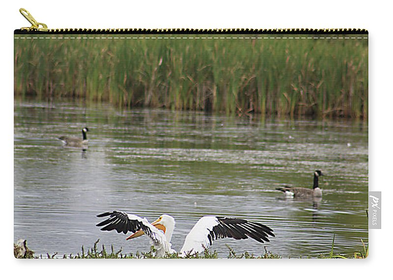 Animal Carry-all Pouch featuring the photograph Into The Water by Alyce Taylor