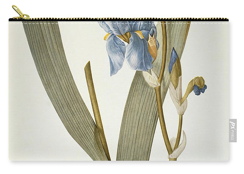 Iris Carry-all Pouch featuring the painting Iris Pallida by Pierre Joseph Redoute