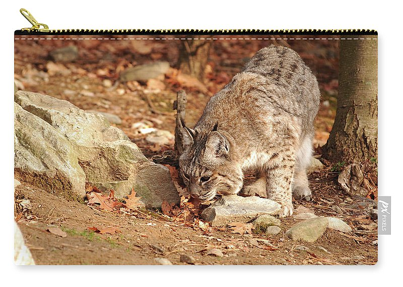 Bobcat Carry-all Pouch featuring the photograph It Was Here by Lori Tambakis