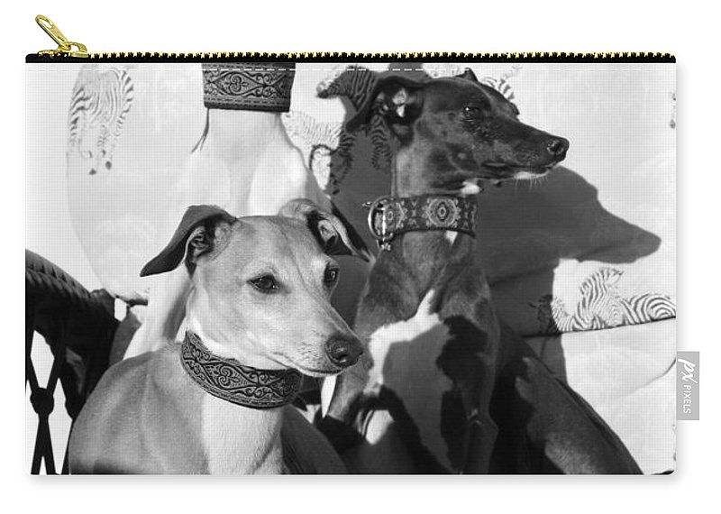 Editorial Carry-all Pouch featuring the photograph Italian Greyhounds In Black And White by Angela Rath