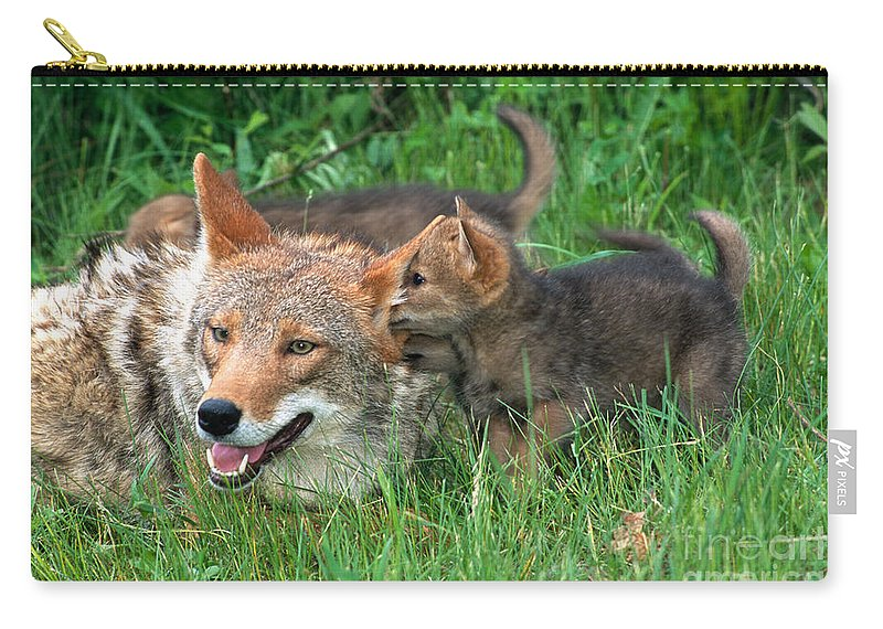 Coyote Carry-all Pouch featuring the photograph I've Got A Secret by Sandra Bronstein