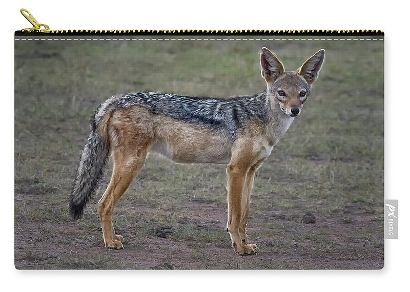 Africa Carry-all Pouch featuring the photograph Jackal 0124 by Karen Celella