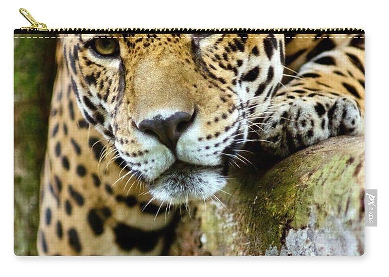 Jaguar Carry-all Pouch featuring the photograph Jaguar by Dant� Fenolio