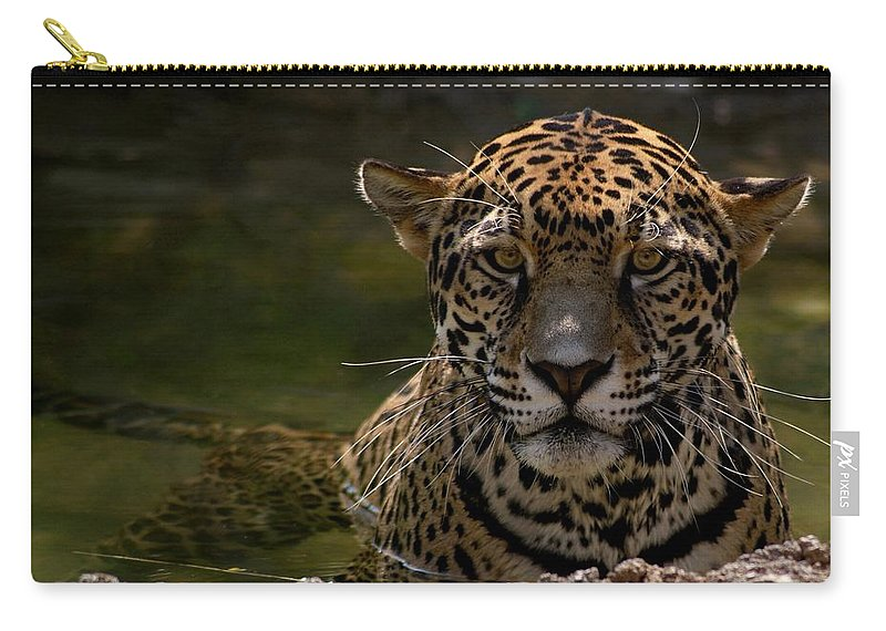 Jaguar Carry-all Pouch featuring the photograph Jaguar In The Water by Sandy Keeton
